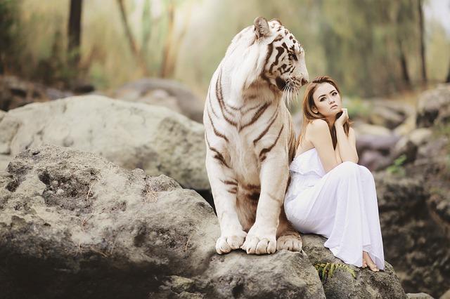 bílý bengálský tygr a dívka
