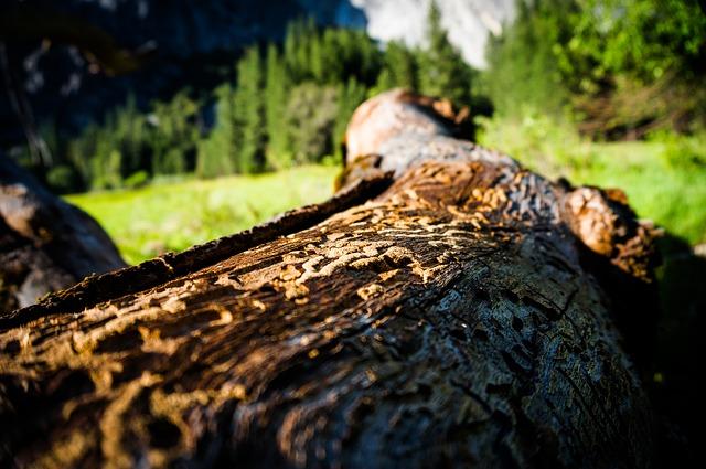 skácený strom