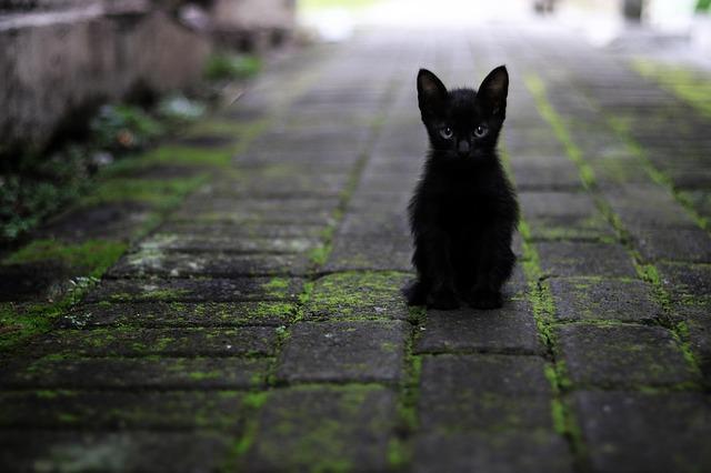 černé koťátko