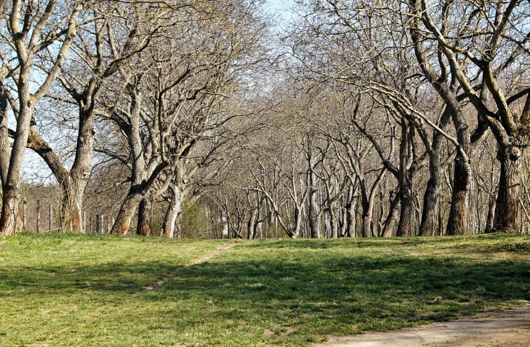 ořechové stromy